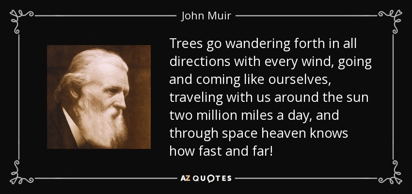 Trees go wandering forth in all directions with every wind, going and coming like ourselves, traveling with us around the sun two million miles a day, and through space heaven knows how fast and far! - John Muir