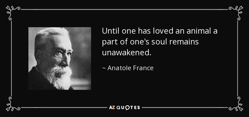 Image result for anatole france animal quote