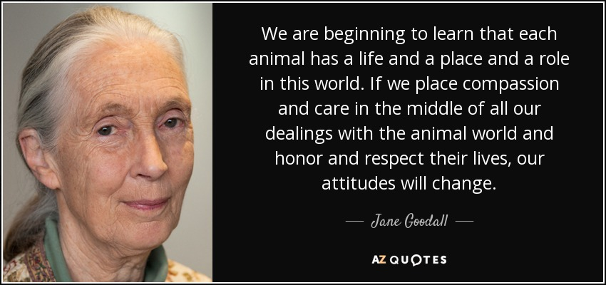 We are beginning to learn that each animal has a life and a place and a role in this world. If we place compassion and care in the middle of all our dealings with the animal world and honor and respect their lives, our attitudes will change. - Jane Goodall