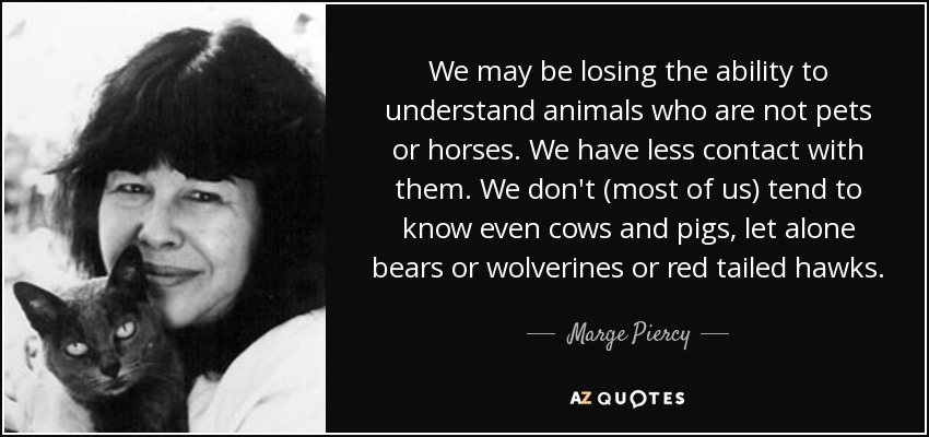 We may be losing the ability to understand animals who are not pets or horses. We have less contact with them. We don't (most of us) tend to know even cows and pigs, let alone bears or wolverines or red tailed hawks. - Marge Piercy