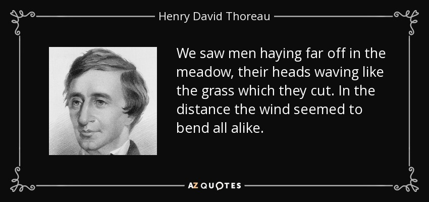 We saw men haying far off in the meadow, their heads waving like the grass which they cut. In the distance the wind seemed to bend all alike. - Henry David Thoreau