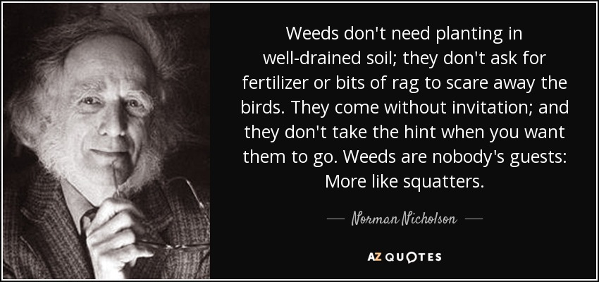 QUOTES BY NORMAN NICHOLSON | A-Z Quotes