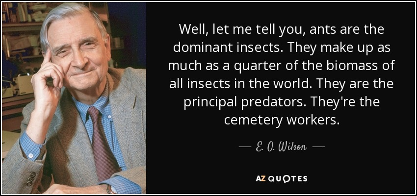 Well, let me tell you, ants are the dominant insects. They make up as much as a quarter of the biomass of all insects in the world. They are the principal predators. They're the cemetery workers. - E. O. Wilson