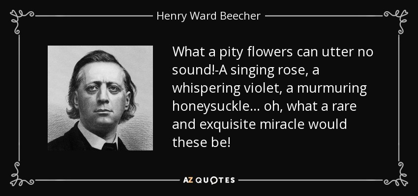 What a pity flowers can utter no sound!-A singing rose, a whispering violet, a murmuring honeysuckle ... oh, what a rare and exquisite miracle would these be! - Henry Ward Beecher
