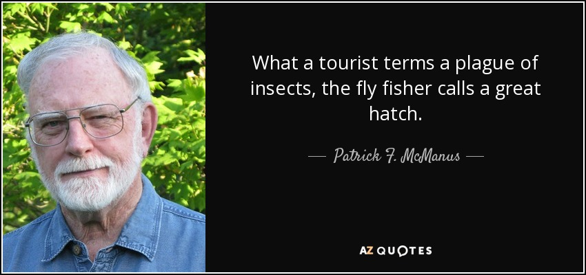 What a tourist terms a plague of insects, the fly fisher calls a great hatch. - Patrick F. McManus