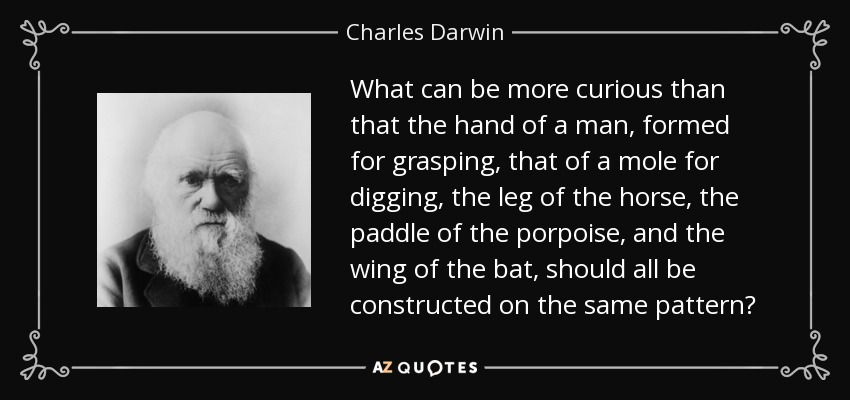 What can be more curious than that the hand of a man, formed for grasping, that of a mole for digging, the leg of the horse, the paddle of the porpoise, and the wing of the bat, should all be constructed on the same pattern? - Charles Darwin