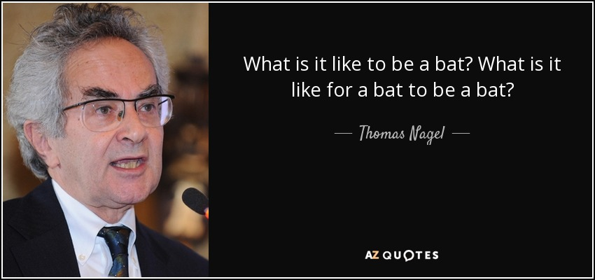 Image result for what it is like to be a bat