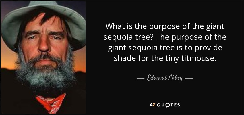 What is the purpose of the giant sequoia tree? The purpose of the giant sequoia tree is to provide shade for the tiny titmouse. - Edward Abbey