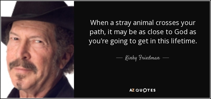 When a stray animal crosses your path, it may be as close to God as you're going to get in this lifetime. - Kinky Friedman