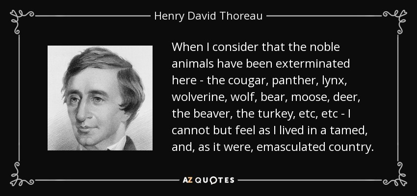 When I consider that the noble animals have been exterminated here - the cougar, panther, lynx, wolverine, wolf, bear, moose, deer, the beaver, the turkey, etc, etc - I cannot but feel as I lived in a tamed, and, as it were, emasculated country. - Henry David Thoreau