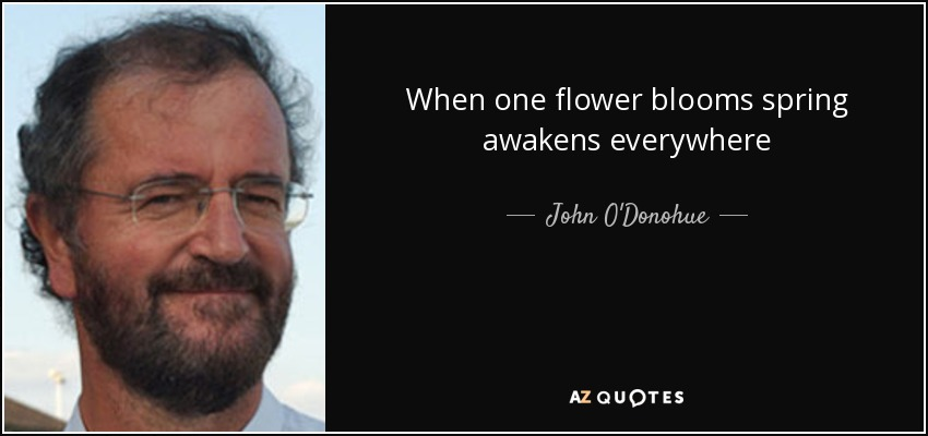 When one flower blooms spring awakens everywhere - John O'Donohue