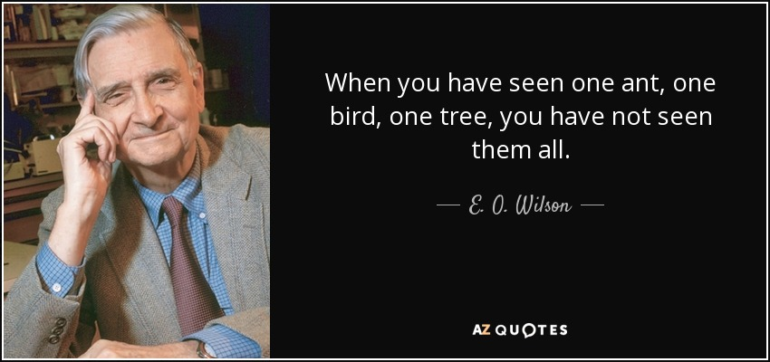 When you have seen one ant, one bird, one tree, you have not seen them all. - E. O. Wilson