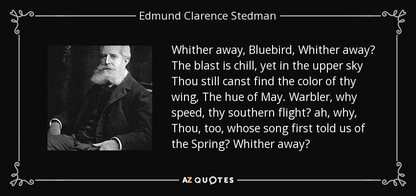 Whither away, Bluebird, Whither away? The blast is chill, yet in the upper sky Thou still canst find the color of thy wing, The hue of May. Warbler, why speed, thy southern flight? ah, why, Thou, too, whose song first told us of the Spring? Whither away? - Edmund Clarence Stedman
