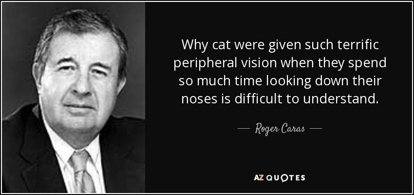 Why cat were given such terrific peripheral vision when they spend so much time looking down their noses is difficult to understand. - Roger Caras