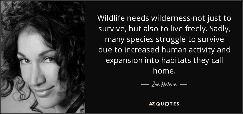 Wildlife needs wilderness-not just to survive, but also to live freely. Sadly, many species struggle to survive due to increased human activity and expansion into habitats they call home. - Zoe Helene