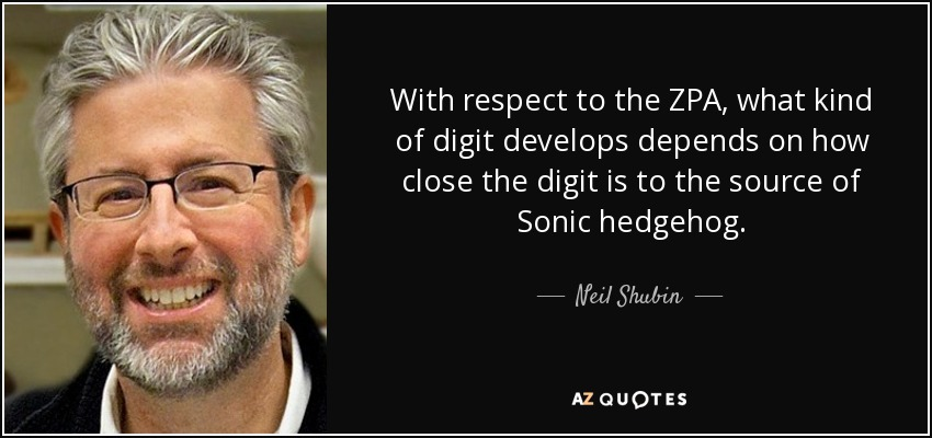 With respect to the ZPA, what kind of digit develops depends on how close the digit is to the source of Sonic hedgehog. - Neil Shubin