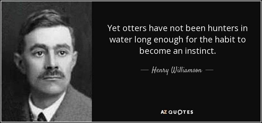 Yet otters have not been hunters in water long enough for the habit to become an instinct. - Henry Williamson