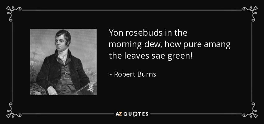 Yon rosebuds in the morning-dew, how pure amang the leaves sae green! - Robert Burns