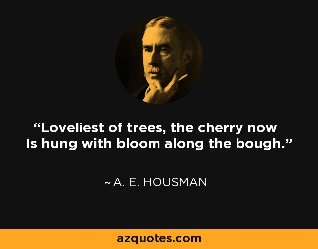 Loveliest of trees, the cherry now Is hung with bloom along the bough. - A. E. Housman