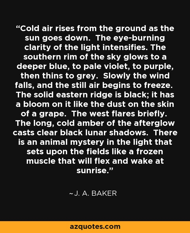 Cold air rises from the ground as the sun goes down. The eye-burning clarity of the light intensifies. The southern rim of the sky glows to a deeper blue, to pale violet, to purple, then thins to grey. Slowly the wind falls, and the still air begins to freeze. The solid eastern ridge is black; it has a bloom on it like the dust on the skin of a grape. The west flares briefly. The long, cold amber of the afterglow casts clear black lunar shadows. There is an animal mystery in the light that sets upon the fields like a frozen muscle that will flex and wake at sunrise. - J. A. Baker