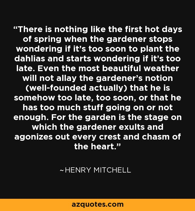 There is nothing like the first hot days of spring when the gardener stops wondering if it's too soon to plant the dahlias and starts wondering if it's too late. Even the most beautiful weather will not allay the gardener's notion (well-founded actually) that he is somehow too late, too soon, or that he has too much stuff going on or not enough. For the garden is the stage on which the gardener exults and agonizes out every crest and chasm of the heart. - Henry Mitchell