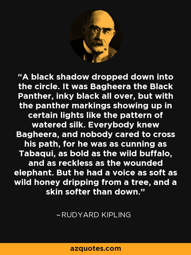 A black shadow dropped down into the circle. It was Bagheera the Black Panther, inky black all over, but with the panther markings showing up in certain lights like the pattern of watered silk. Everybody knew Bagheera, and nobody cared to cross his path, for he was as cunning as Tabaqui, as bold as the wild buffalo, and as reckless as the wounded elephant. But he had a voice as soft as wild honey dripping from a tree, and a skin softer than down. - Rudyard Kipling