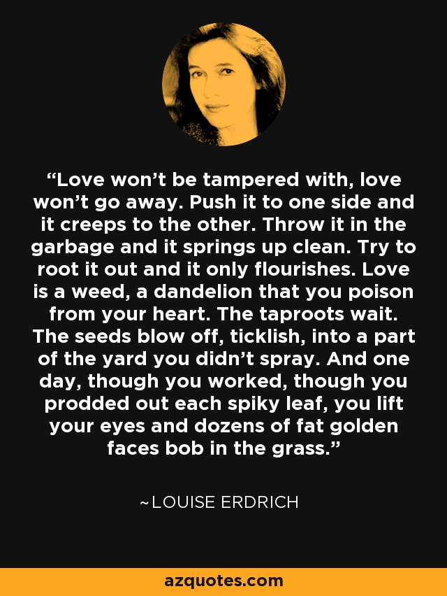 Love won't be tampered with, love won't go away. Push it to one side and it creeps to the other. Throw it in the garbage and it springs up clean. Try to root it out and it only flourishes. Love is a weed, a dandelion that you poison from your heart. The taproots wait. The seeds blow off, ticklish, into a part of the yard you didn't spray. And one day, though you worked, though you prodded out each spiky leaf, you lift your eyes and dozens of fat golden faces bob in the grass. - Louise Erdrich