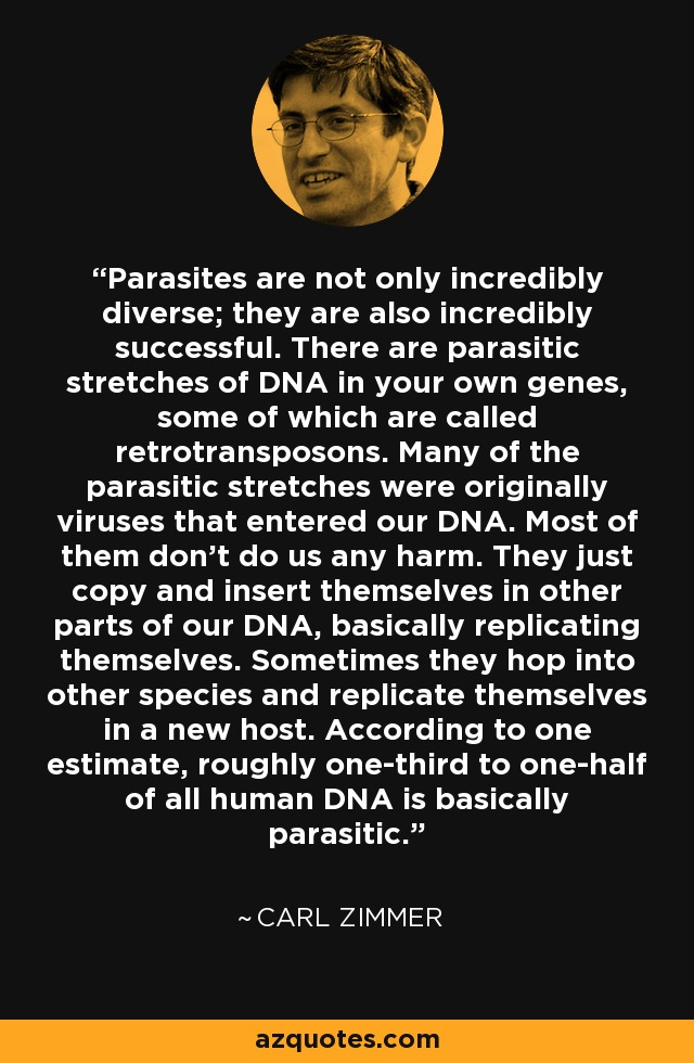 Parasites are not only incredibly diverse; they are also incredibly successful. There are parasitic stretches of DNA in your own genes, some of which are called retrotransposons. Many of the parasitic stretches were originally viruses that entered our DNA. Most of them don't do us any harm. They just copy and insert themselves in other parts of our DNA, basically replicating themselves. Sometimes they hop into other species and replicate themselves in a new host. According to one estimate, roughly one-third to one-half of all human DNA is basically parasitic. - Carl Zimmer