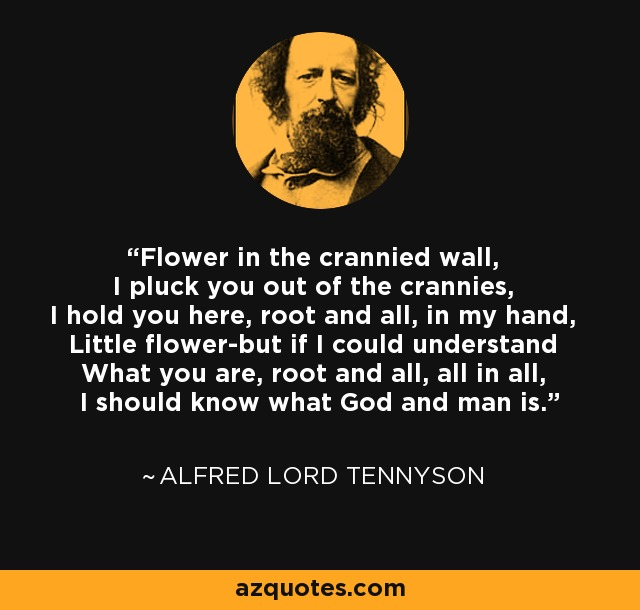 Flower in the crannied wall, I pluck you out of the crannies, I hold you here, root and all, in my hand, Little flower-but if I could understand What you are, root and all, all in all, I should know what God and man is. - Alfred Lord Tennyson