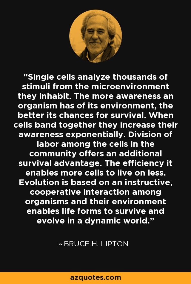 Single cells analyze thousands of stimuli from the microenvironment they inhabit. The more awareness an organism has of its environment, the better its chances for survival. When cells band together they increase their awareness exponentially. Division of labor among the cells in the community offers an additional survival advantage. The efficiency it enables more cells to live on less. Evolution is based on an instructive, cooperative interaction among organisms and their environment enables life forms to survive and evolve in a dynamic world. - Bruce H. Lipton