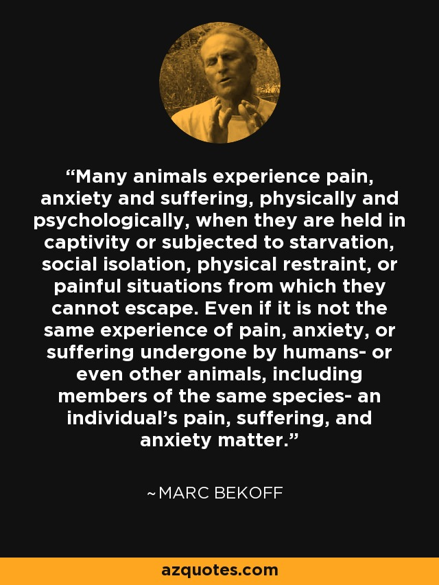 Many animals experience pain, anxiety and suffering, physically and psychologically, when they are held in captivity or subjected to starvation, social isolation, physical restraint, or painful situations from which they cannot escape. Even if it is not the same experience of pain, anxiety, or suffering undergone by humans- or even other animals, including members of the same species- an individual's pain, suffering, and anxiety matter. - Marc Bekoff