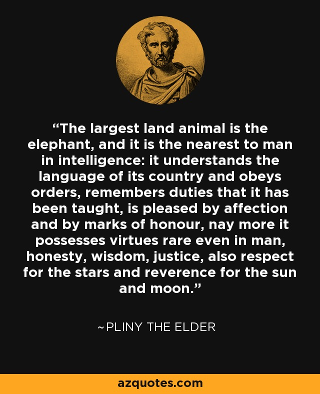 The largest land animal is the elephant, and it is the nearest to man in intelligence: it understands the language of its country and obeys orders, remembers duties that it has been taught, is pleased by affection and by marks of honour, nay more it possesses virtues rare even in man, honesty, wisdom, justice, also respect for the stars and reverence for the sun and moon. - Pliny the Elder
