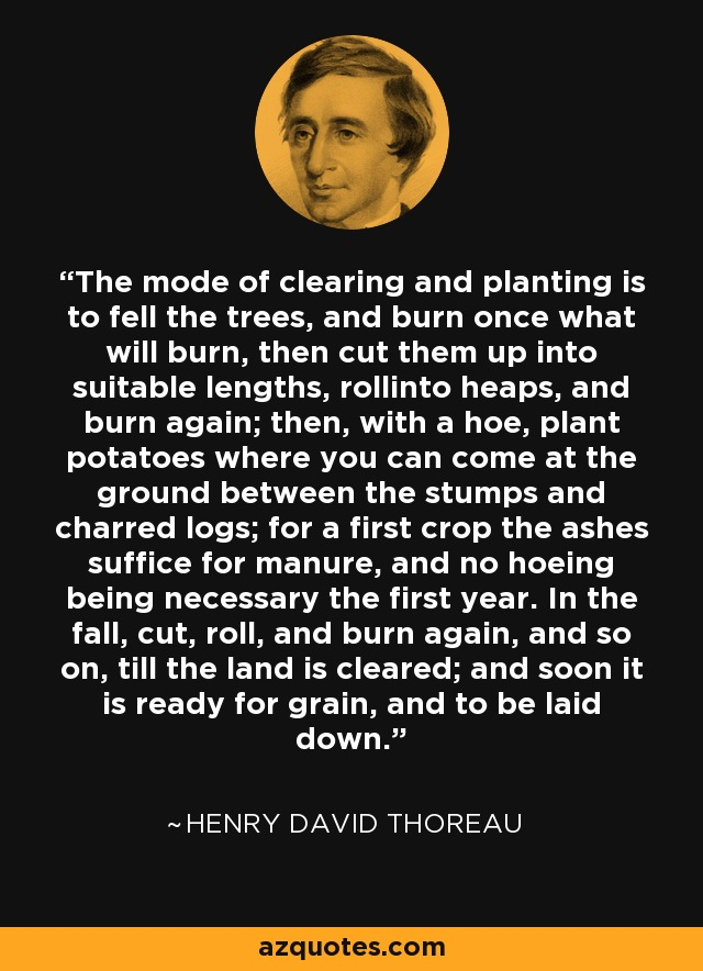 The mode of clearing and planting is to fell the trees, and burn once what will burn, then cut them up into suitable lengths, rollinto heaps, and burn again; then, with a hoe, plant potatoes where you can come at the ground between the stumps and charred logs; for a first crop the ashes suffice for manure, and no hoeing being necessary the first year. In the fall, cut, roll, and burn again, and so on, till the land is cleared; and soon it is ready for grain, and to be laid down. - Henry David Thoreau