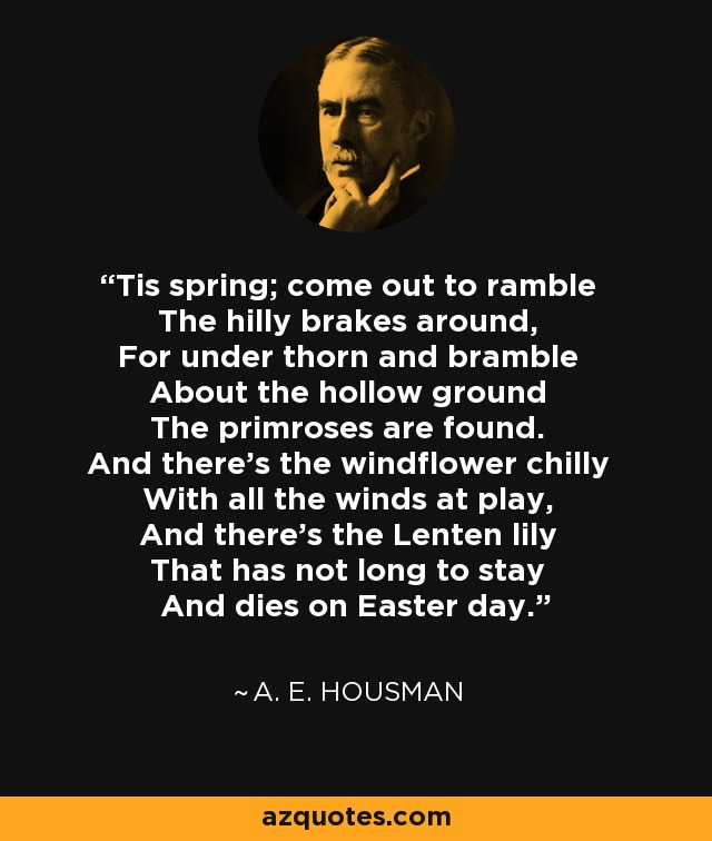 'Tis spring; come out to ramble The hilly brakes around, For under thorn and bramble About the hollow ground The primroses are found. And there's the windflower chilly With all the winds at play, And there's the Lenten lily That has not long to stay And dies on Easter day. - A. E. Housman