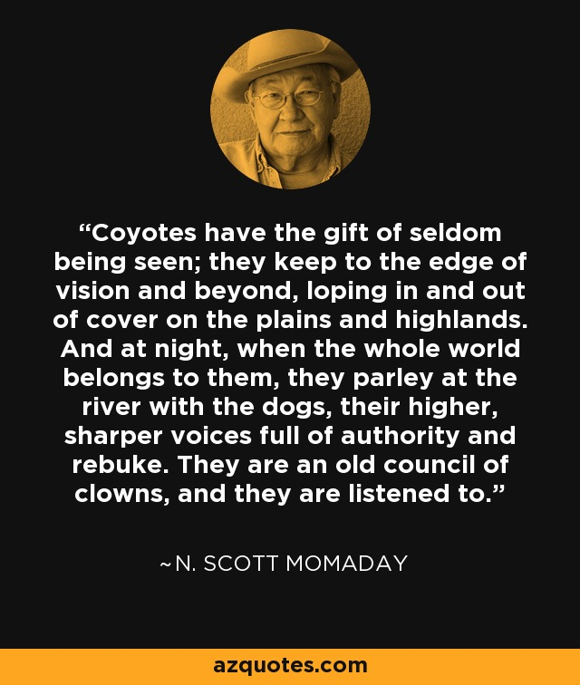 Coyotes have the gift of seldom being seen; they keep to the edge of vision and beyond, loping in and out of cover on the plains and highlands. And at night, when the whole world belongs to them, they parley at the river with the dogs, their higher, sharper voices full of authority and rebuke. They are an old council of clowns, and they are listened to. - N. Scott Momaday
