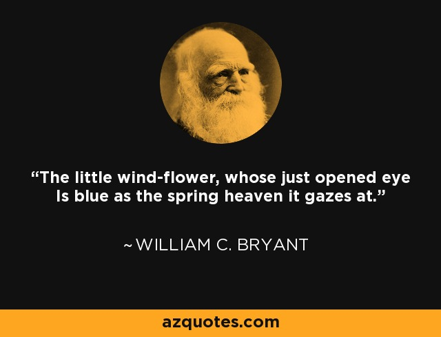 The little wind-flower, whose just opened eye Is blue as the spring heaven it gazes at. - William C. Bryant