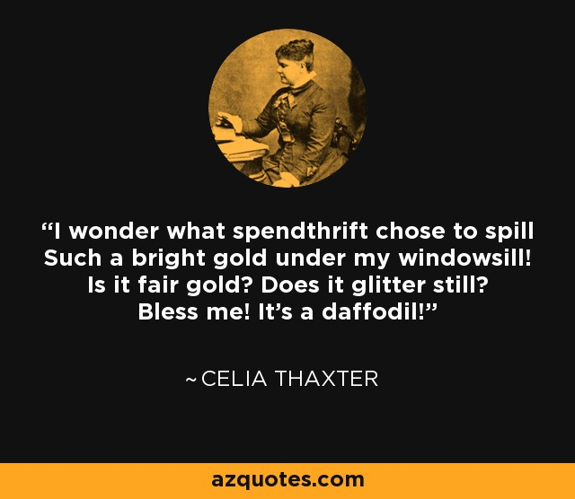 I wonder what spendthrift chose to spill Such a bright gold under my windowsill! Is it fair gold? Does it glitter still? Bless me! It's a daffodil! - Celia Thaxter