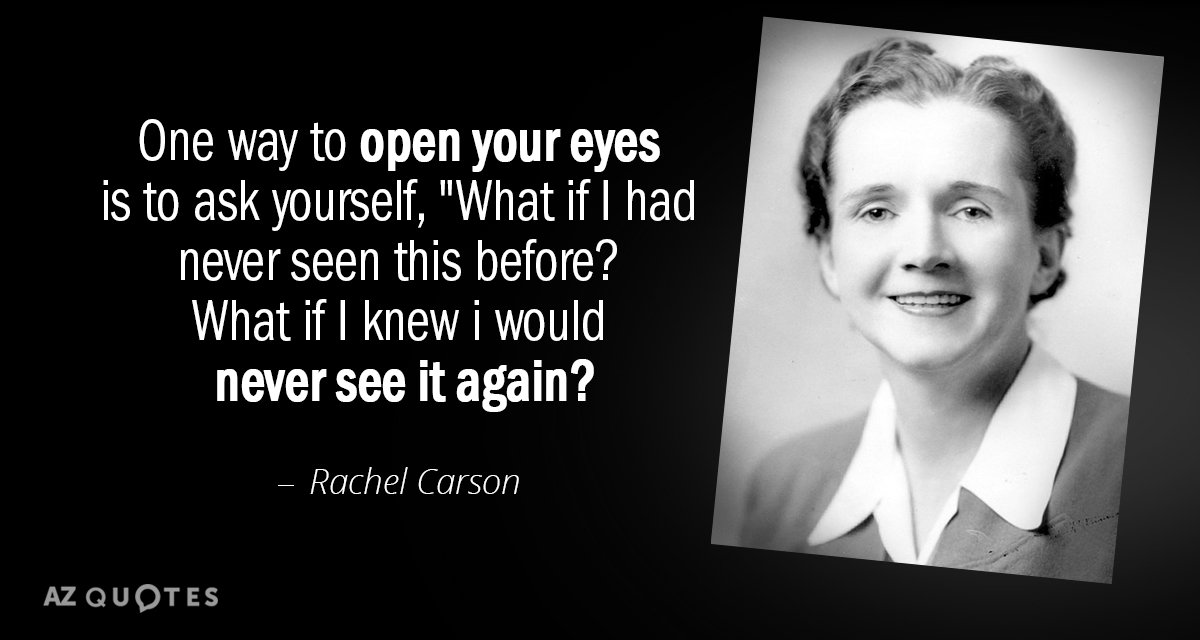 TOP 60 QUOTES BY RACHEL CARSON Of 60 AZ Quotes Simple Rachel Carson Quotes